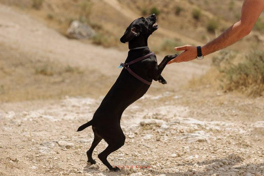 Preboda con perros